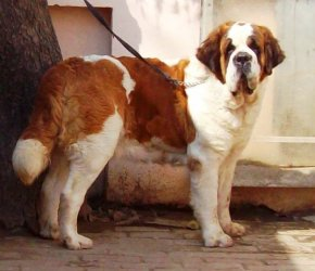 Dog Kennel For Sale In Pune