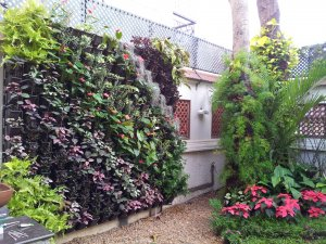 vertical garden in bangalore vertical garden. Black Bedroom Furniture Sets. Home Design Ideas
