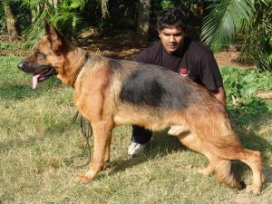 Dogs on sale in bangalore dating. line graphs and radiometric dating examples.