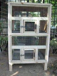 parrot sale in bangalore